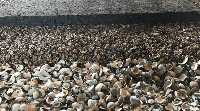 infiltratiebekkens schelpen