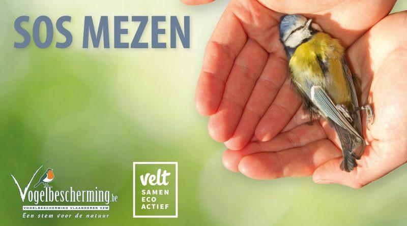 Vlamingen melden massaal dode vogels op SOS Mezen