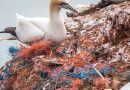 Waarom gooien wij massaal vuil op straat? Vijf mogelijke redenen voor zwerfafval