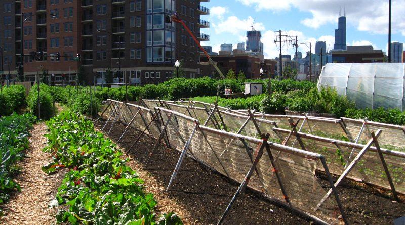 stadslandbouw