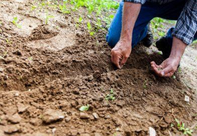 Plasticvrij tuinieren, het kan!